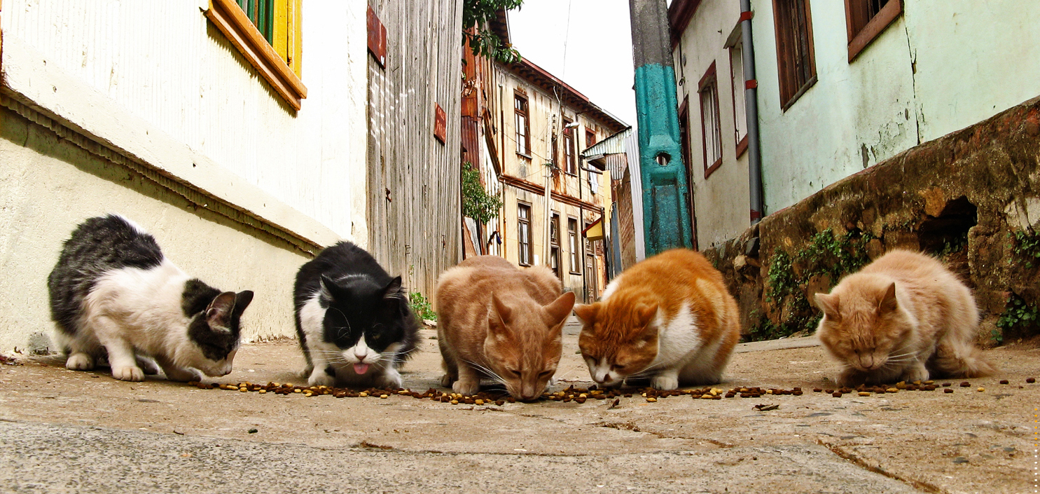 street_cats-copia-e1470333319778